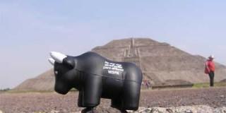 La FLAC présente à Mexico pour le 5è Sommet Mondial Anti-corrida