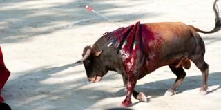 Viande malsaine d'animaux torturés pour le plaisir: c'est bon pour les pauvres…
