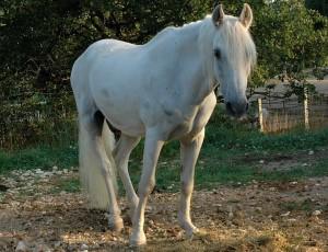 VALRICO, cheval de corrida sauvé par Paula LOIS (photo à mettre dans le corps du texte).